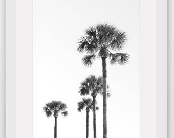 Palm Tree Print, Abstract Palm Tree, Black and White Photography, Summer Art, Tropical Palm Tree, Tropical Decor, 8 x 10 inches, Unframed