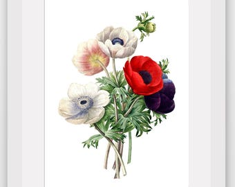 Poppy Print, Botanical Illustration, Poppy Bunch, Garden Art, Floral Theme Decor, 8 x 10 inches, Unframed