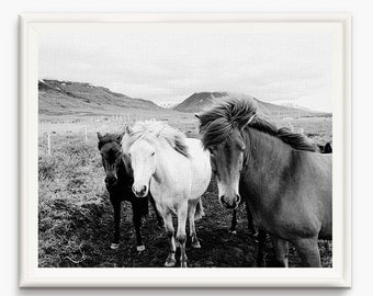 Horse Print, Horses Wall Art Print, Black and White photo, Horse Wall Art, Printable art, Wild Horse Photo, Wilderness Print, Nordic Art