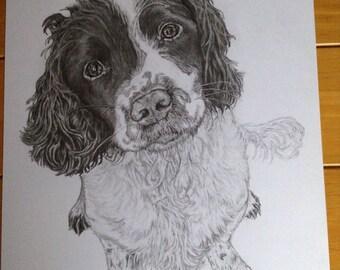A4 Pet Portraits