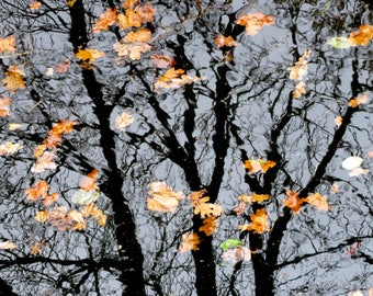 Reflections of autumn trees & leaves on the Stratford upon Avon canal - original colour print, ready for framing