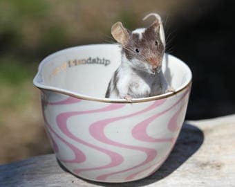 Half a Cup Taxidermy Mouse
