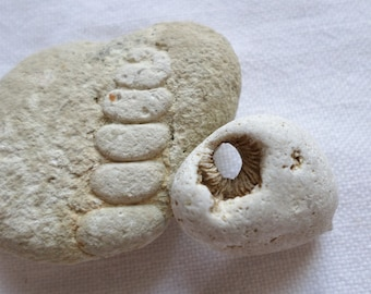 Limestone fossils, found at the edge of the Atlantic ocean. Small fossils