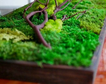 """18x36"""" Moss Wall Art with Manzanita branches. Real preserved zero-care green wall. Real preserved moss, ferns, and driftwood."""