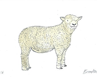 Original illustration - Sheep