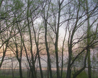 """Trees in foggy morning,  Bluffer's Park,  Toronto, framed print, 11"""" X 14"""""""