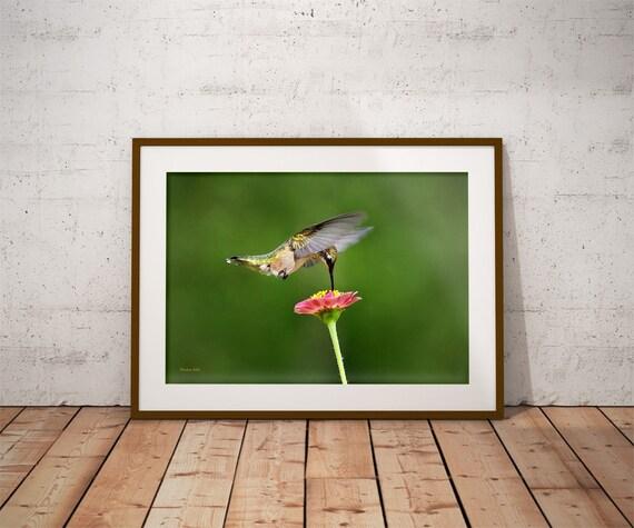 Nature Photography, Hummingbird Picture, Bird Print, Bird Photography, Hummingbird Art, Wall Art, Fine Art Photography, Hummingbird Print