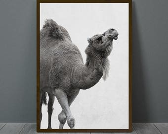 Camel Print, Camel Wall Decor, Camel Poster, Camel, Animal Print Wall Decor, Printable Camel Wall Art