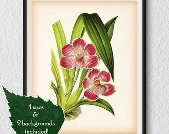Botanical print, Orchid, Instant download print, Botanical illustration, Botanical print vintage, Orchid print, Antique botanical print, #1