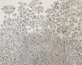 Queen Anne's Lace #6 (ink on illustration board)