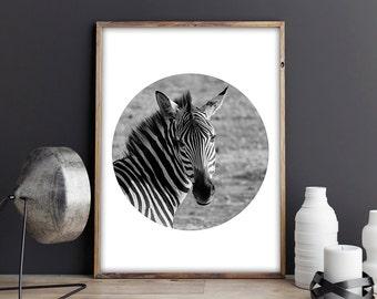 SALE! Zebra, Nature, Animals, Black and White, Circle Print, Photo Print, Photography, Printable Art, Printable a4, A4
