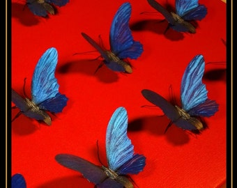 interior,decoration,butterfly,wall art,object,sculpture,original,display,For all butterfly art collectors !