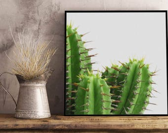 Cactus III Artwork - Framed / Unframed canvas / Print - Botanic