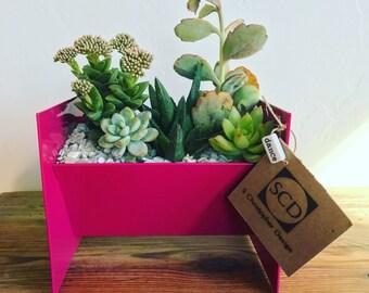 Succulent/Cactus Planter - Medium