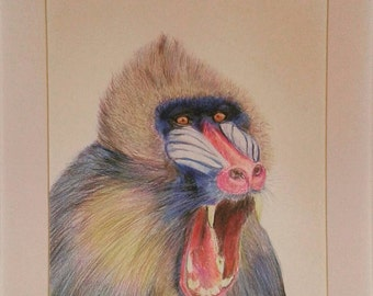Limited edition baboon print.