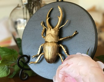 Beetle/Insect Home Decor, Gold Faux Insect Taxidermy, Wall Art, Home Decor