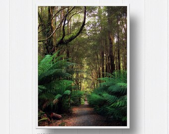 Forrest, Landscape, Photography, Digital Prints, Digital Download, Prints, Digital Wall Art, ferns, travel, nature, trees