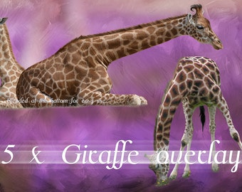 Giraffe Overlays | Giraffes |photo overlay| Photoshop Giraffes | Giraffe Pack | Animal Overlay | Giraffe Photos | Digital | Digital Overlay