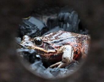 Frog, OR - PRINT
