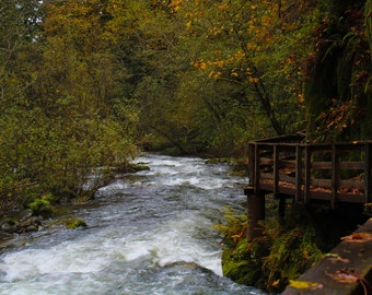 Sweet Creek Trail Photograph