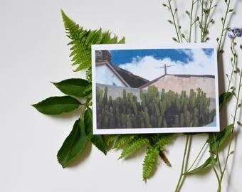 Blue Sky & Cacti - postcard print