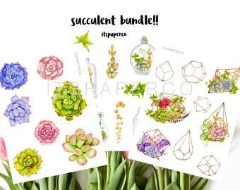 Succulent Value Bundle - Bullet Journal Stickers - Planner Stickers - Decorative Stickers - WS002, WS001, WS004
