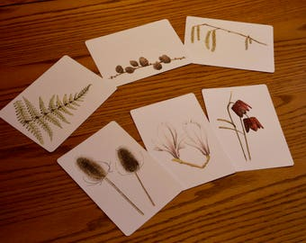 Nature Postcards - set of six different designs