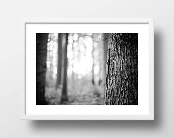 Tree Bark Forest Art Print // Woof!