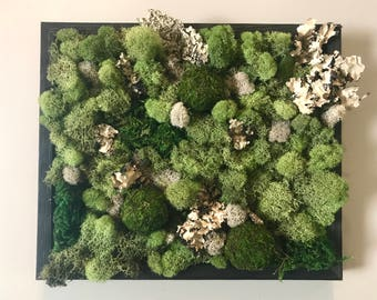 Moss picture