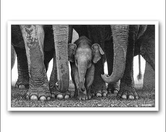 New Elephant Limited Edition fine art wildlife print. A detailed photo-realistic pencil drawing signed and numbered Black and white picture.