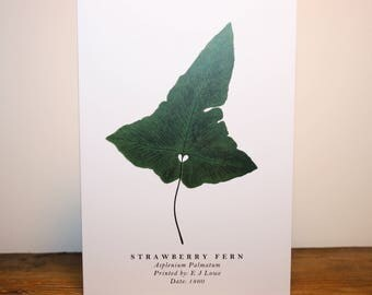 Strawberry Fern: Greeting Card