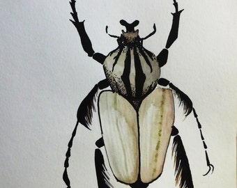 Beetle drawing. bug ilustration. Watercolor painting, Ink drawing, animal ilustration, insect art A4 drawing