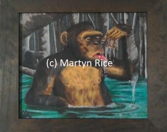 Chimpanzee drinking