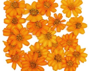 Pressed flowers, orange zinnia 20pcs for art craft card making scrapbooking