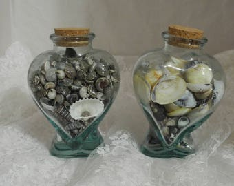 Two Bottles of Small Shells for Crafting or Jewelry Making