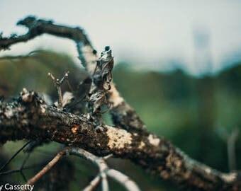 Tree Branch digital
