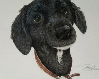 Coloured Pet Portraits