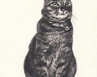 Cat painting /Pencil drawing/ 猫の鉛筆画