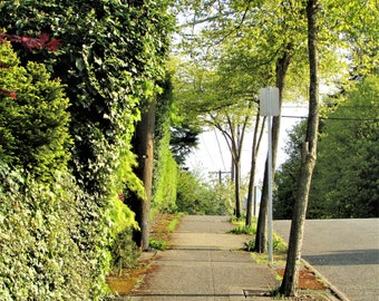 Instant Download, Spring Day in Port Orchard, Quiet Side Walk with Vibrant Green Plant Life, Digital Image