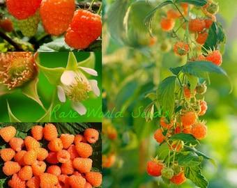 HARDY! Raspberry 'Valentina' Beautiful apricot pink-coloured fruits! Seeds.