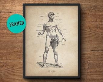 Anatomy poster, Framed art, Human body, Anatomy illustration, Anatomy decor, Human anatomy poster, Anatomy print, Medical student gift