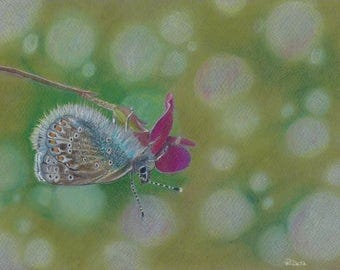 Realistic Butterfly original colored pencil and pastel artwork