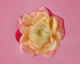 Newborn Photography Prop Digital Background, Pink and Yellow Flower