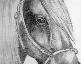 Original Horse Drawing A3