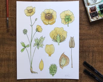 Yellow Flower Cat Botanical Giclée Print