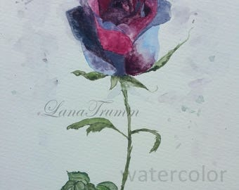Black rose in watercolor