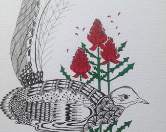 "Original art - ""Superb Lyrebird and waratah"""