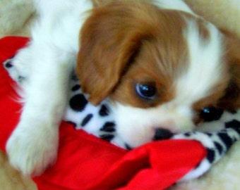 Pet pillow, Minky Cuddle Packs, a custom furry friend!