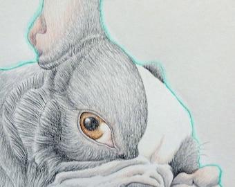 Boston Terrier Original Pencil Drawing 8 x 10  Pet Dog Art-Carla Smale