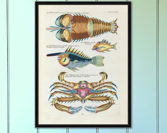 Tropical Fish Serious (No.4) Antique Reproduction Print  antique fish print coastal decor art home decor antique print tropical decor giclee